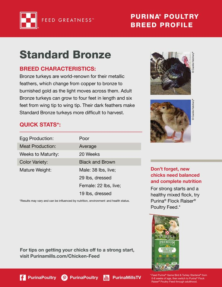 Featured poultry breed: Standard Bronze Turkey  This world-renowned breed of turkey is widely known for their metallic feathers. As the light passes across a Standard Bronze turkey, the feather color will change from copper to bronze to burnished gold. Click for tips on how to start raising turkeys.