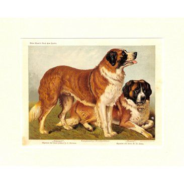 Check out this item at One Kings Lane! St. Bernard, 1885