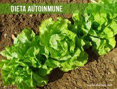 Las personas que tienen o sospechan de una enfermedad autoinmune suelen beneficiarse de una dieta autoinmune: sin cereales, gluten o legumbres, similar a la...
