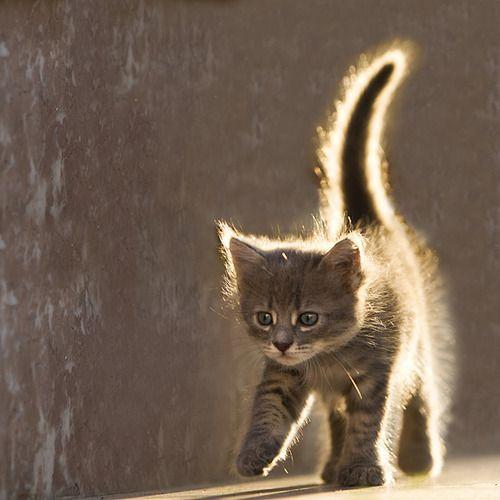 Kitten. <3