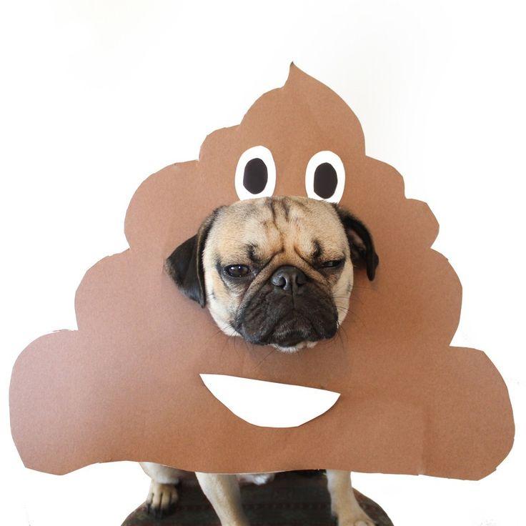 Help Doug the Pug choose his Halloween costume