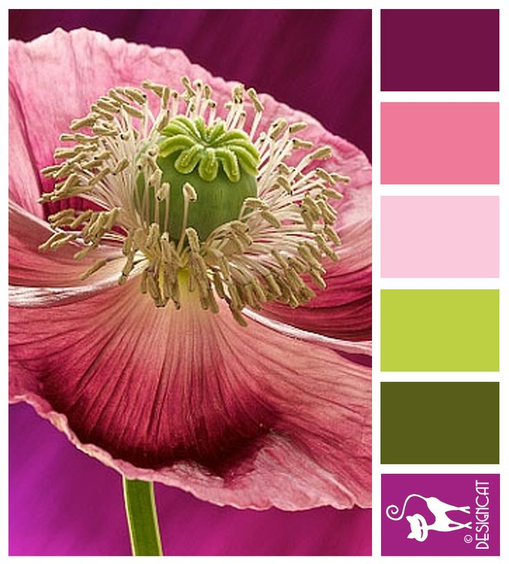 Pink Poppy - Plum, Pink, Cerise, Pastel, dusky, Green, Leaf, Sage - Designcat Colour Inspiration Board