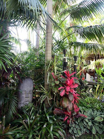 Sunnybank garden of Rene and Carolyn Hundscheidt | Best tropical gardens in Brisbane | Photo Galleries and News Photos | News Pictures and Photos | The Courier-Mail