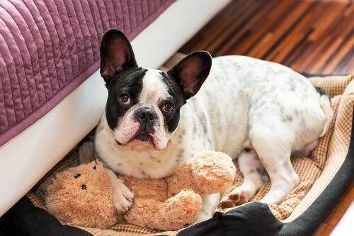 Causas de la muerte súbita en perros