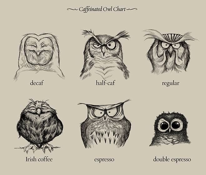 The effects of each type of coffee is easily summarized and explained by the facial expressions of owls.