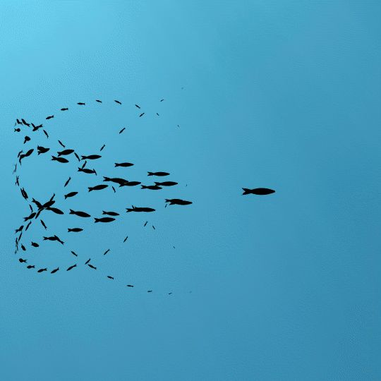 Minimalism & Multitude: The Swarming Animated GIFs of Frédéric Vayssouze-Faure