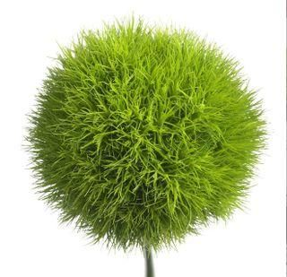 my favorite flower looks like it belongs in a dr seuss book. LOVE IT!  Green Dianthus