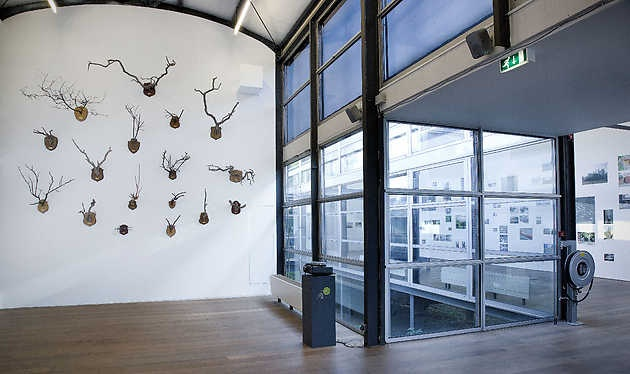 Maarten Vandeneynde, Taxonomic Trophies 2005-2008). © Gert Jan van Rooij, Museum De Paviljoens