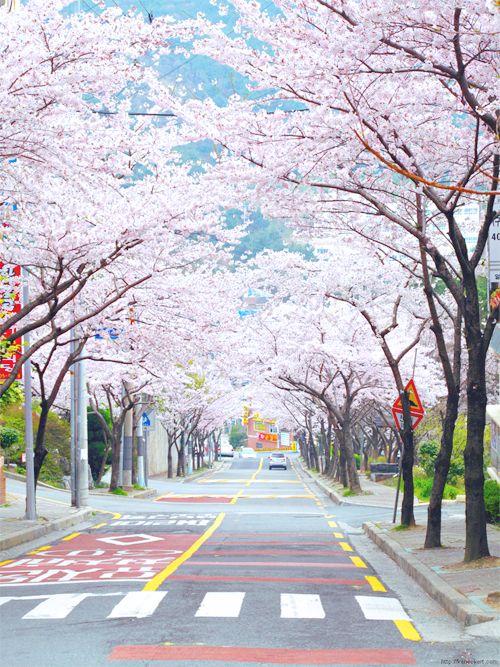 Spring in Japan via ~ wishes + dreams : Photo