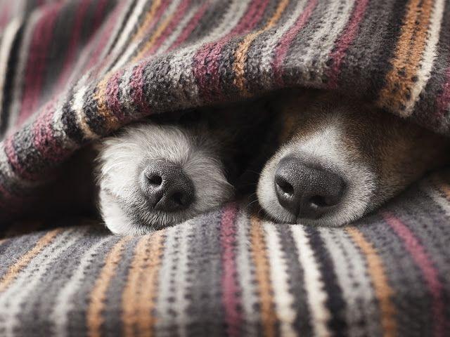 Pet Sitting: 8 πράγματα που ο ψυχρός καιρός μπορεί να επηρεάσει...
