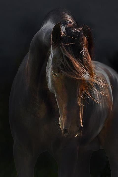 andalusian horse | animals + equine photography . Please also visit www.JustForYouPropheticArt.com for colorful, inspirational art and stories. Thank you so much!
