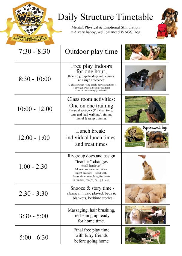 Daily Timetable   Wags Doggy Day Care