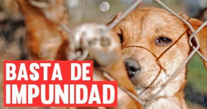 We need free hospitals for the animals of Santa Marta