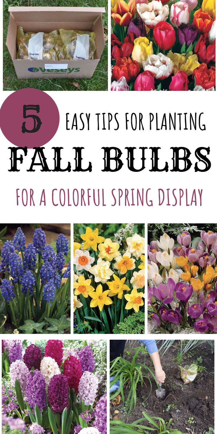 Mini garden inspiration   Easy tips for planting fall bulbs for a colorful spring display
