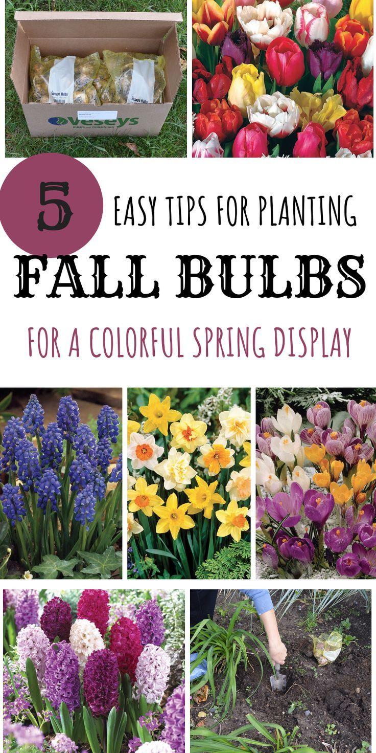 Piantare I Bulbi Di Tulipani 5 semplici consigli per piantare i bulbi autunnali per un