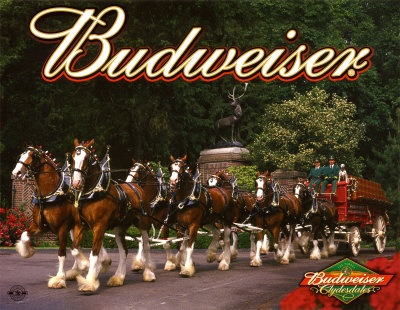 The Budweiser Clydesdale Horses  missori really young