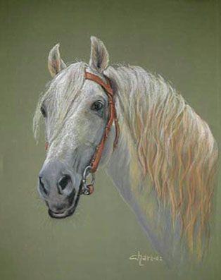 """""""Caballo berberisco blanco"""" Cuadro pintado a Pastel por Chari González"""