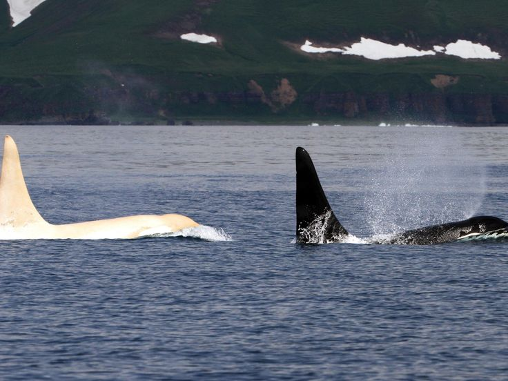 People were amazed by a photo of a rare white orca.The truth behind it is deeply disturbing