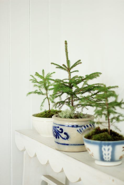 Small Christmas trees as decoration in old bowls. Styling/photo Jeanette Lunde http://hysj.bigcartel.com/ byfryd.com