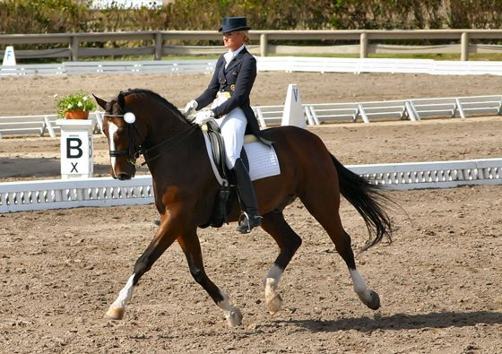 Five Tips to Improve Your Horse's Carriage