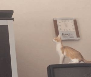 funny-gif-cat-jumping-fail-TV-falling