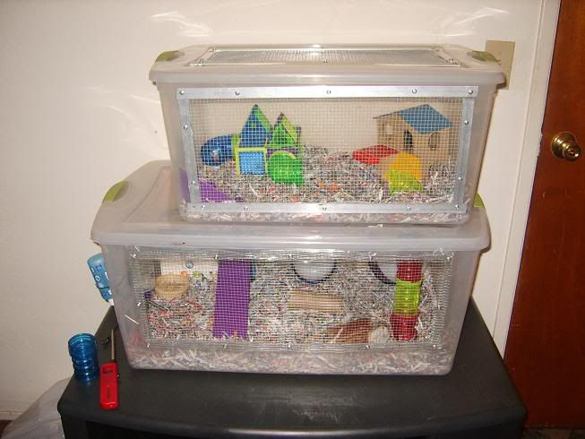 99 best good hamster cages images on pinterest for Fish tank for hamster