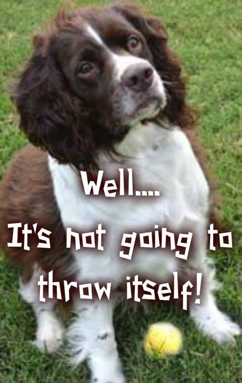 This is all of our Springers all over, Other than Sally who's true love was Mums chocolate cake!