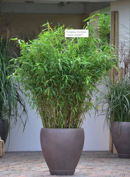 Asian Terrace – XXL plants  #asian #plants #terrac…
