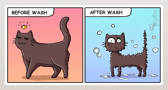 The one about baths | Catsu The Cat