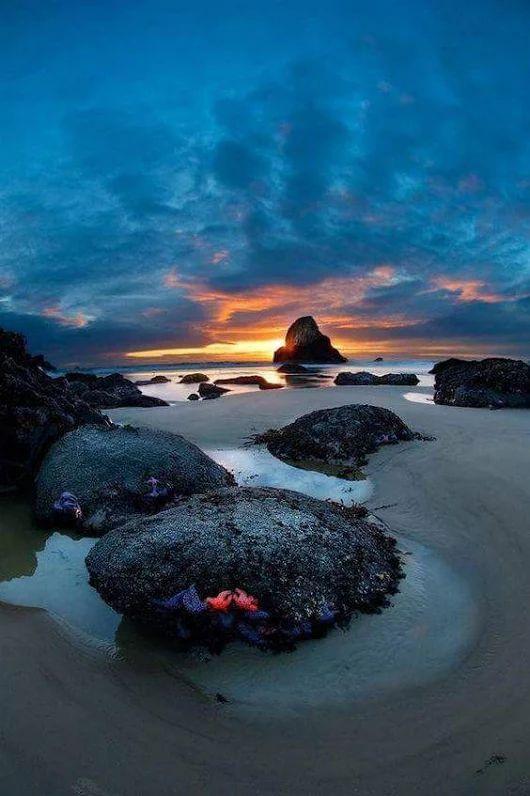Sunset over algae covered rocks at low tide