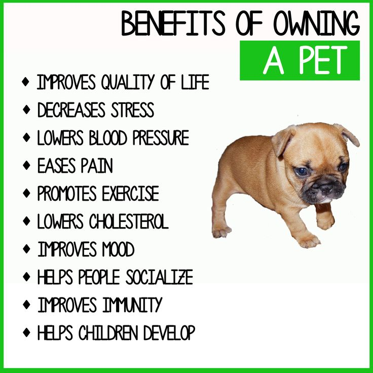 benefits of pet ownership Friends with benefits: on the positive consequences of pet ownership allen r mcconnell miami university christina m brown saint louis university.