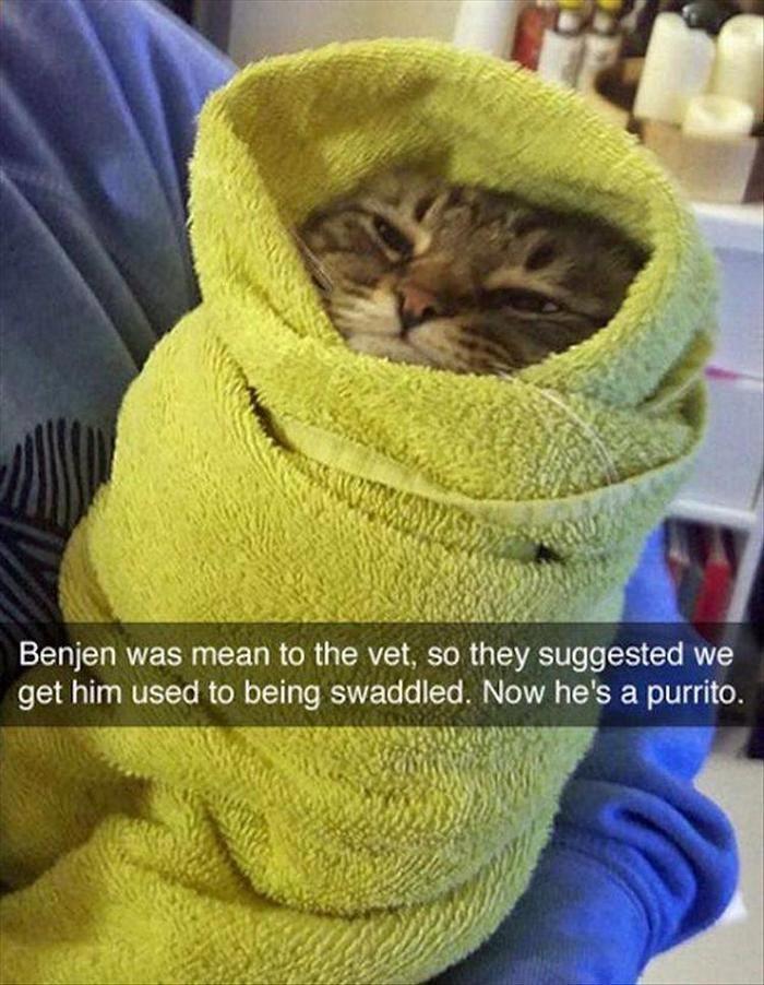 Gatos divertidos del gatito, gatito del gato, – razas de dormir, gatos y gatitos