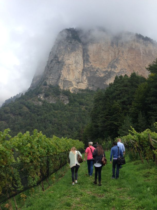 Tiefenbrunner in Alto Adige - one of the highest vineyards I've ever been to (3300 feet up in the Alps!)