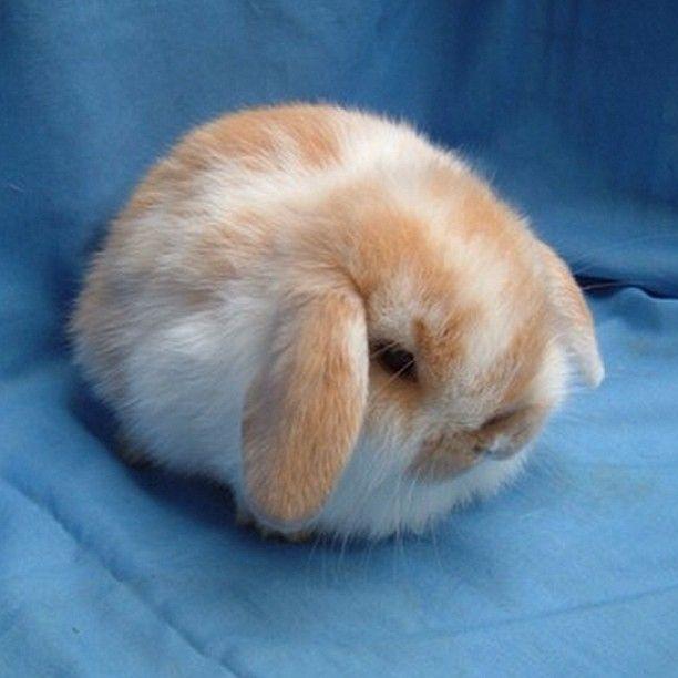 Bunny ball: