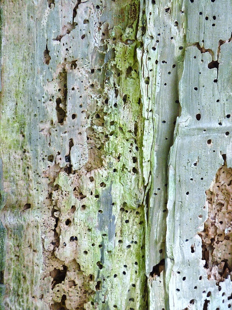 Tree Bark Textures - art in nature - soft blue & green; organic surface pattern, colour and texture source for design