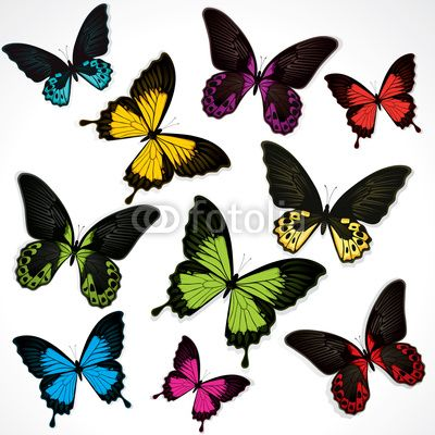 Wallpaper Butterflies