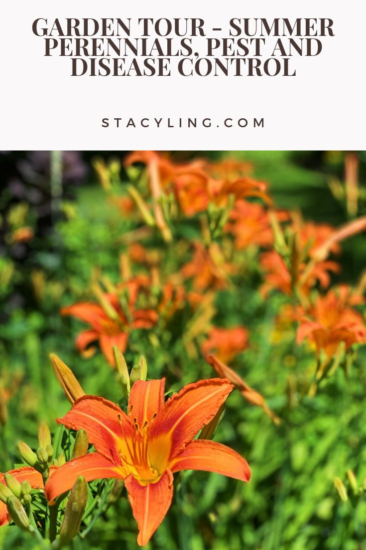 Garden Tour – Summer Perennials, Pest and Disease Control