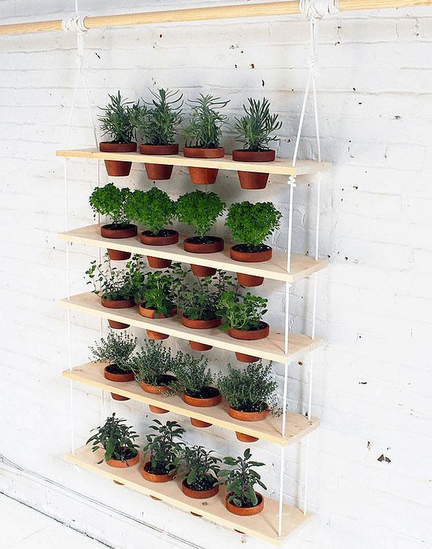 Attractive Best 25+ Herbs Garden Ideas On Pinterest | Growing Herbs, Growing Herbs  Indoors And How To Grow Herbs