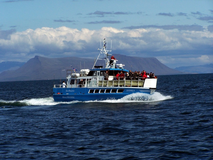 whale watching Iceland  Tourists stay out until a whale is spotted