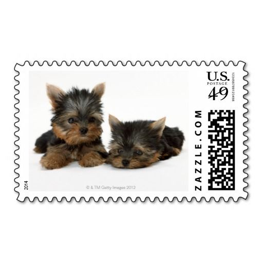 =>>Save on          	Yorkshire Terrier Stamps           	Yorkshire Terrier Stamps today price drop and special promotion. Get The best buyHow to          	Yorkshire Terrier Stamps please follow the link to see fully reviews...Cleck Hot Deals >>> http://www.zazzle.com/yorkshire_terrier_stamps-172680955596171386?rf=238627982471231924&zbar=1&tc=terrest
