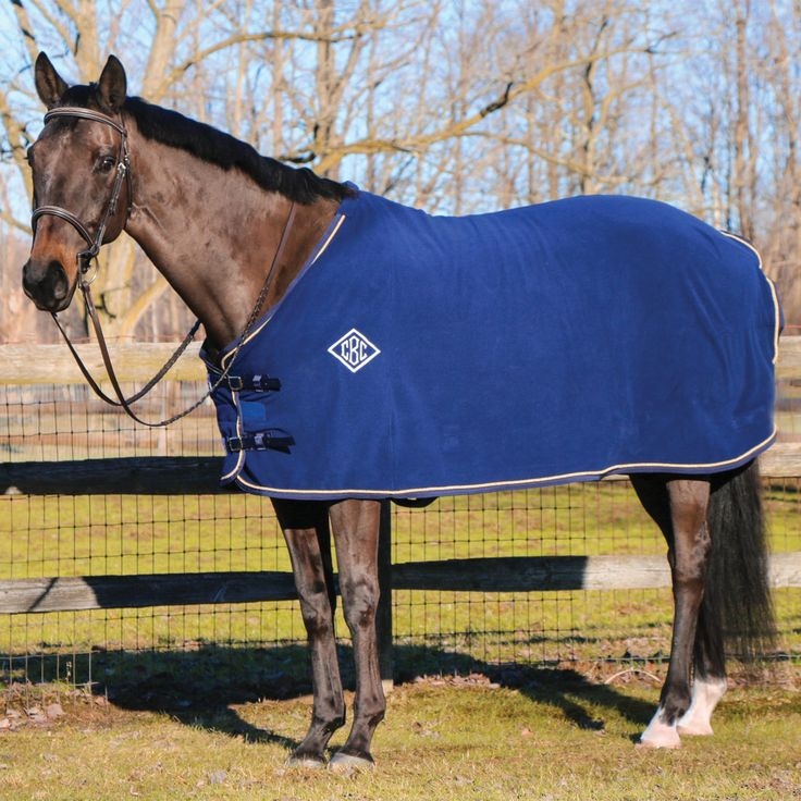 Should You Microchip Your Horse? Schneider Saddlery