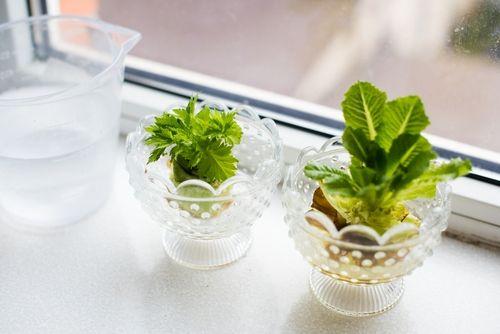 Na to, abyste si vzimním období vypěstovali trochu čerstvých zeleninových natí, nepotřebujete žádné zvláštní zahradnické dovednosti. A co víc: nemusíte čekat dlouhé týdny, až vyklíčí semínko a další měsíce pečovat o rostlinku. Stačí jen správně odkrojenou část vložit do misky svodou.