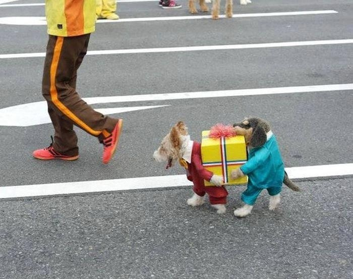 Pretty dogs moving their house ;-)