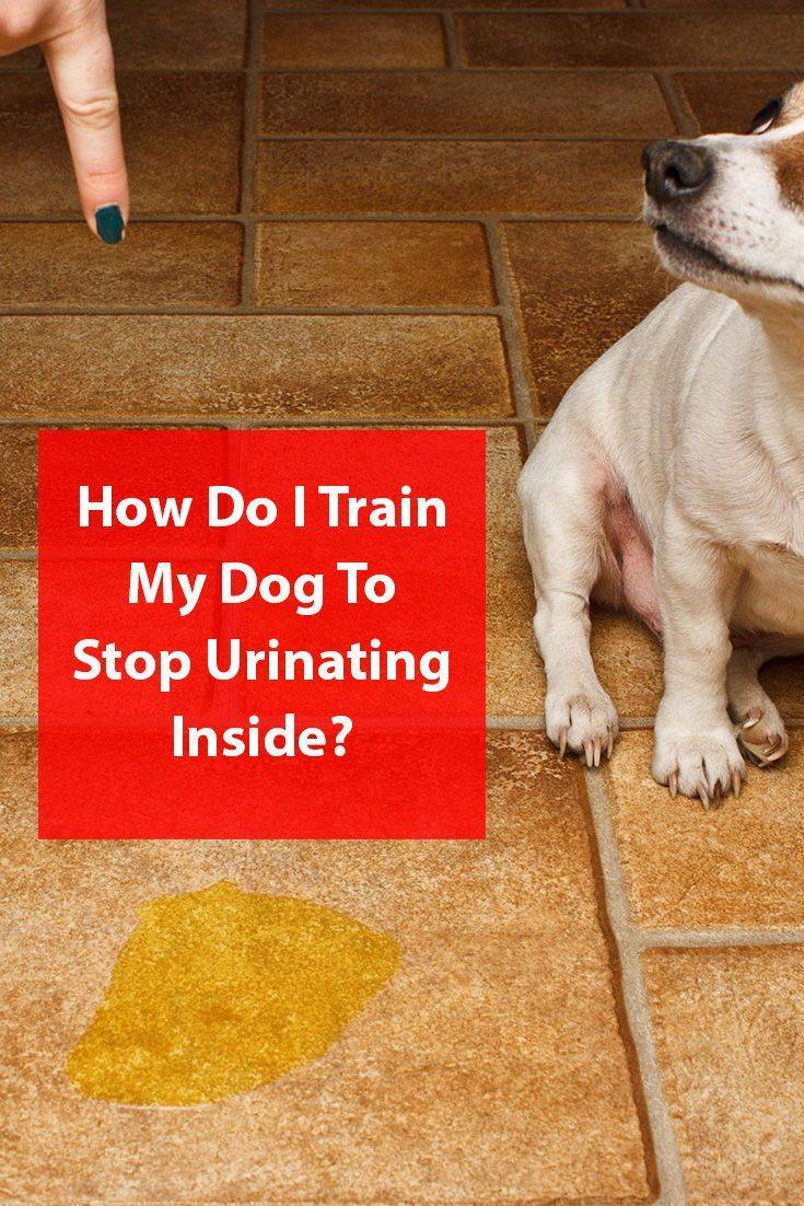 5 Top Tips To Prevent Dogs Urinating Inside Dogs Dog Behavior