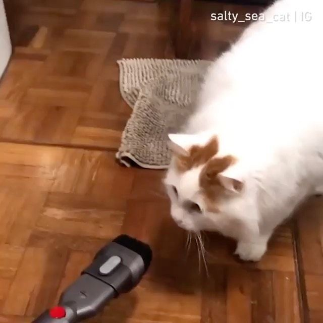 Fun Funny Cat Dog Pet Pets سگ گربه Clip Persiancat Luxurypet حیوانات خانگی Baby Animals Funny Cute Cats And Kittens Cute Cat Drawing