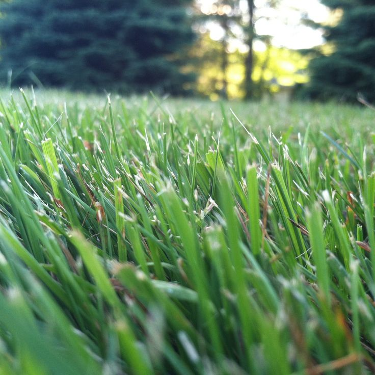 David Watkins - 2012 Best Lawn Photo Contest - Lawn Care ...