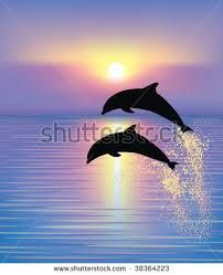 Image result for dolphins jumping out of the water