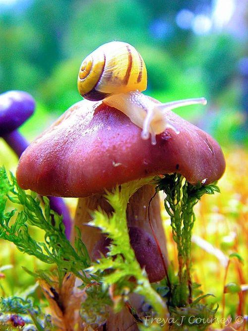 Cute Mushroom #mushrooms, #snails, #nature, https://apps.facebook.com/yangutu/