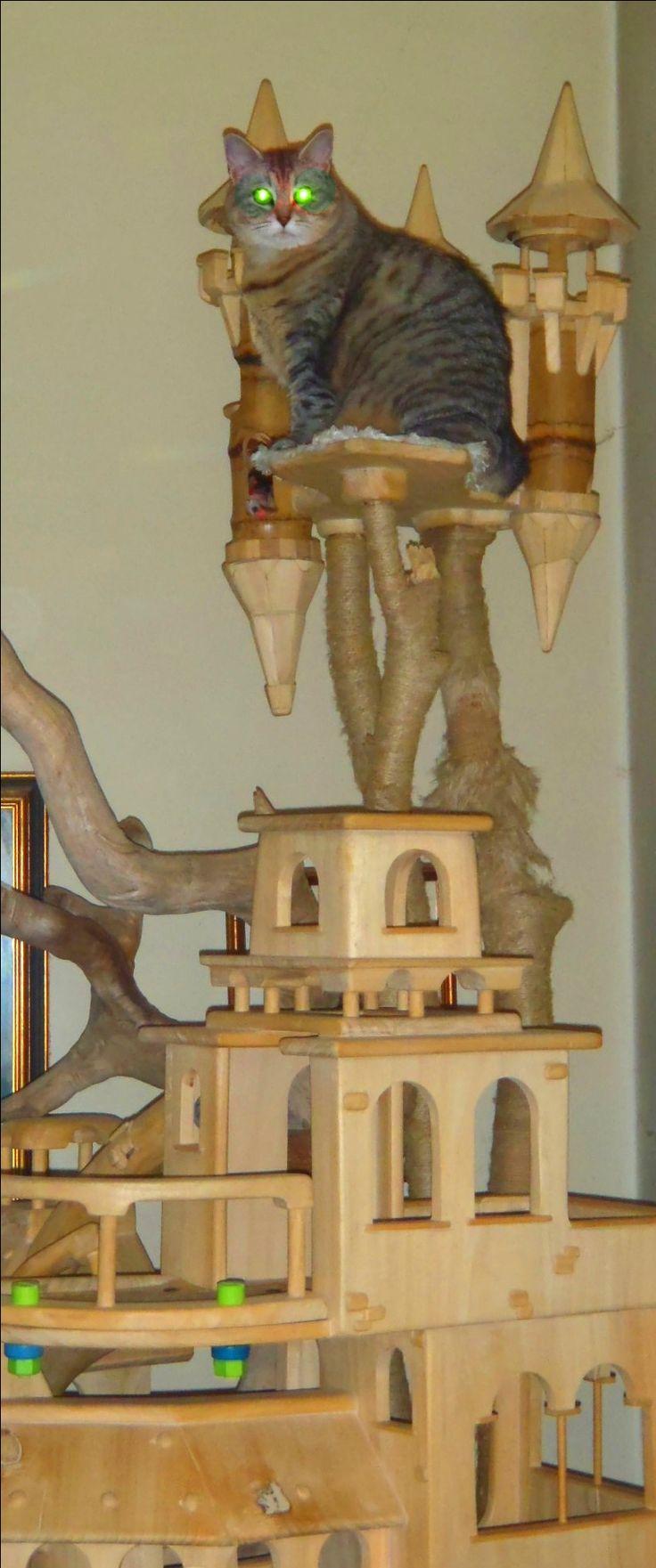 DomusfeliS - special playzone for cats, unique pieces for unique cats - sculptures for cats, untreated precius wood: plum, apricot, seasoned poplar, birch, bamboo, wild oak and piracanta. #luxurycatcastle #castlecat #catcastle #cattower #cattree #catcondo #cattoy #catenclosure #catfrendlyhouse #amazingcatscratching #catscratchforniture #cataccessories #catforniture