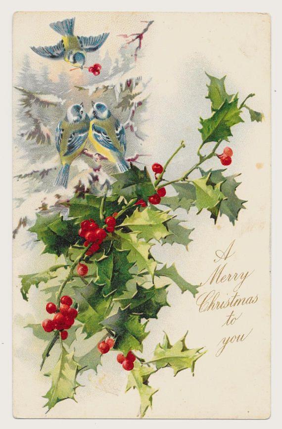 Catharina Klein Bluebirds and Holly Christmas Postcard c.